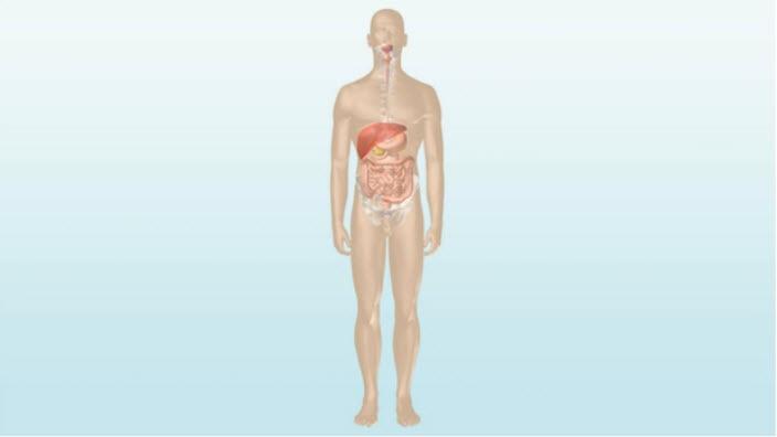 Die Funktionsweise des Darms – lernen Sie mehr über die wichtigsten Funktionen